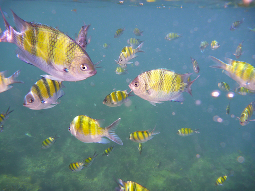 Andaman Sea fish