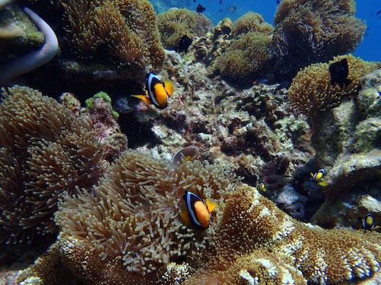snorkeling koh haa yai krabi thailand