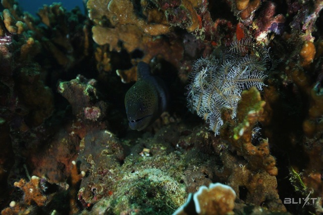 Racha Yai Scuba Diving Moray Eel