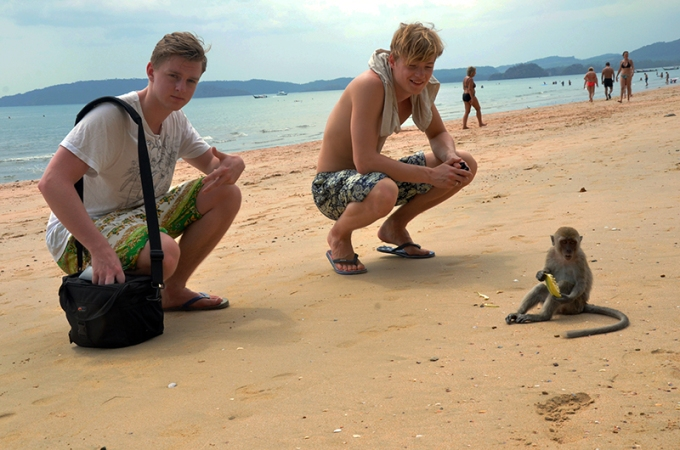 monkeys on ao nang beach diving krabi thailand